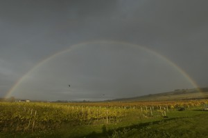 Highdown Vineyard - Rainbow