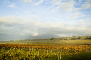 Highdown Vineyard - South Downs
